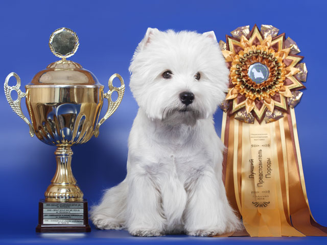 RUS MOLOH ABSOLUT - Top Westie 2014