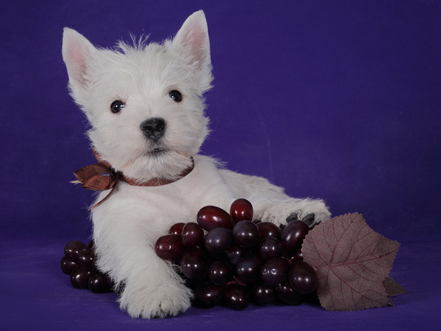 eleanor_7weeks_grape1.jpg