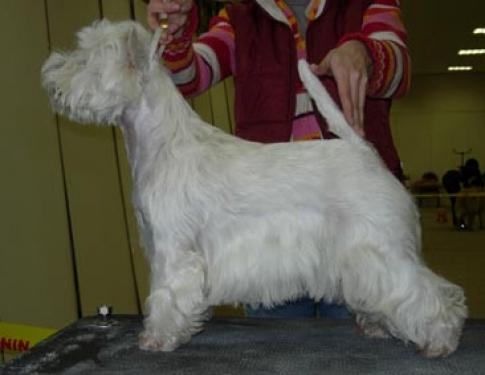 Mechta Nataly Infanta Winner